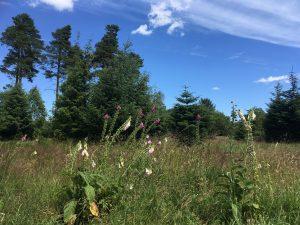 Sol og blå himmel i Rye Nørskov
